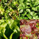 Salade vinaigre balsamique aux figues