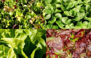 salade balsamique aux figues - solo food