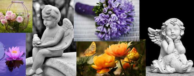 Changer l'eau des fleurs - bandeau